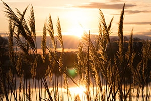 The sun rises on the Chesapeake Bay