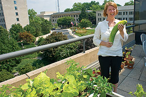 Christy Nichols harvesting a pair of monstrous cucumbers from the organic garden on the fourth floor of Butler terrace. <br />
