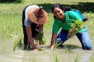Alumna Dilanthi Ranaweera working in a rice field