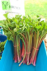 Bunches of Rhubarb for sale at the AU Farmer's Market
