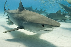 Fin-tastic Collection Highlights for Shark Week