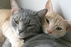 Grey and orange cats in a box, c/o RappCats.