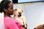 Kogod's audience dog program helps students improve speaking talent.