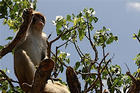 The Puerto Rican island of Cayo Santiago is home to a group of monkeys brought over by North American researchers in 1938.
