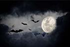 Moon at night with a silhouette of bats