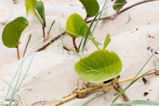 Plants growing out of sand.